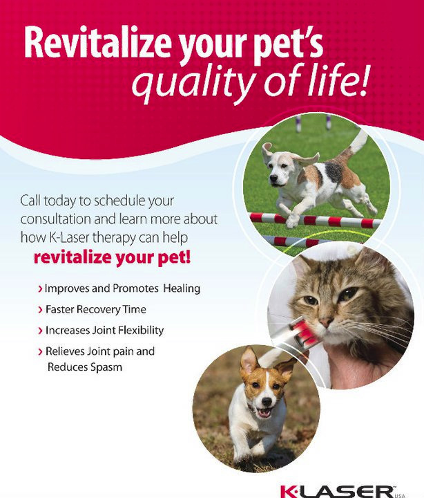 Revitalize Your Pet