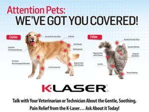 New Jersey Veterinary Blog