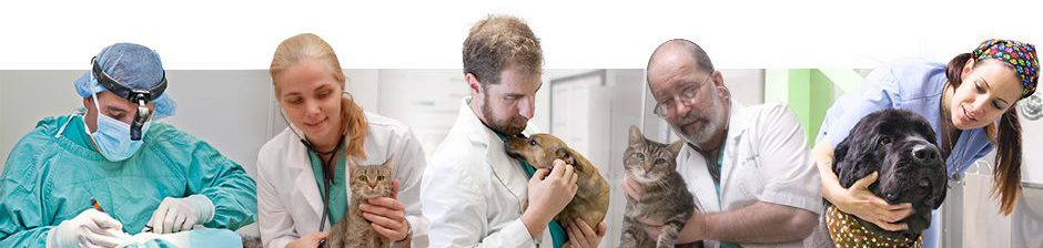 New Jersey Veterinary Blog
